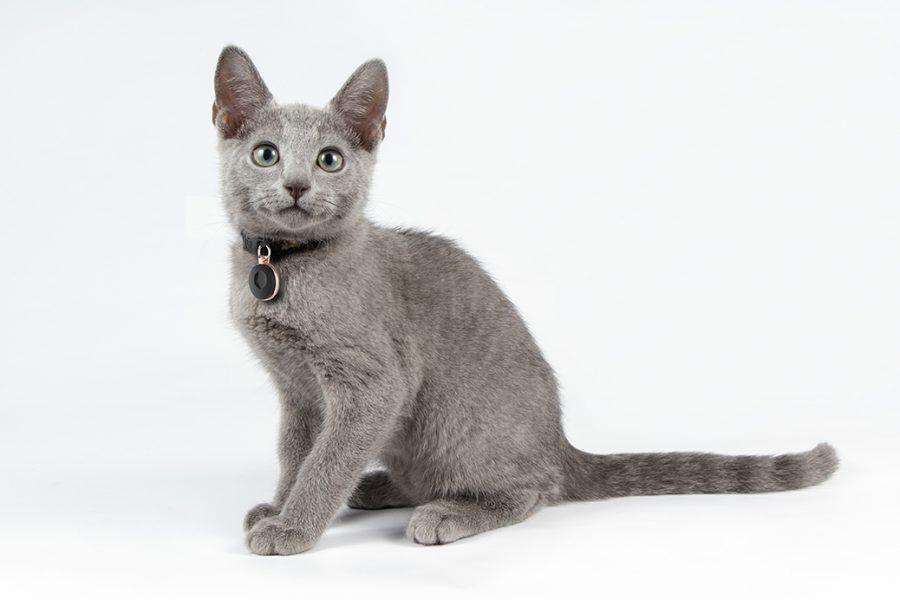 Médaillon pour chat - géolocalisation