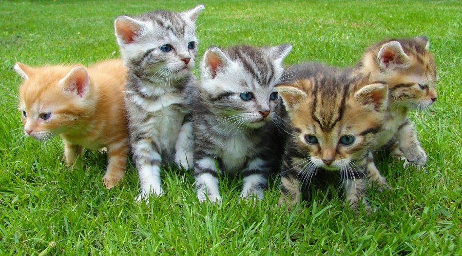 Le bien-être du chaton