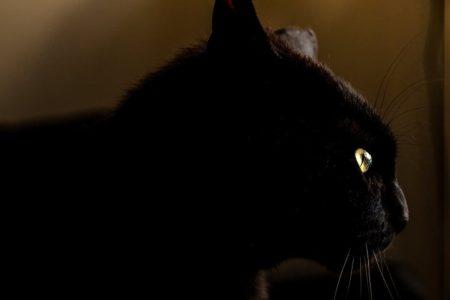 superstition-chat-noir