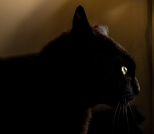 superstition-chat-noir