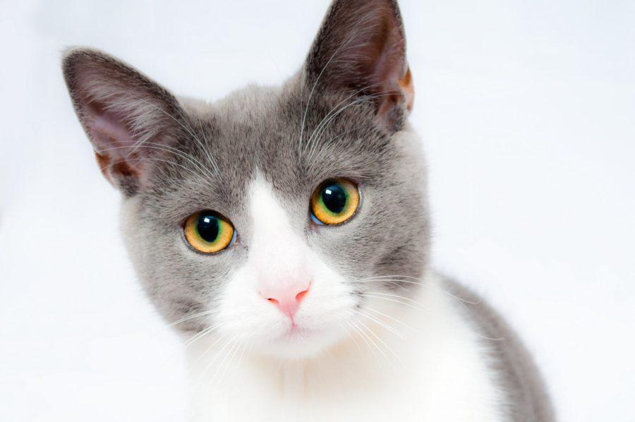 jeune-chat