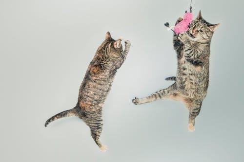 cat-agility