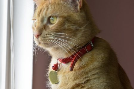 chat-collier